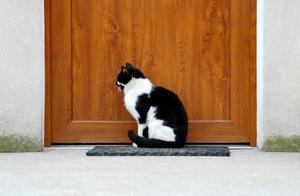 chatiere coment bien l 39 installer en 15 minutes chrono. Black Bedroom Furniture Sets. Home Design Ideas