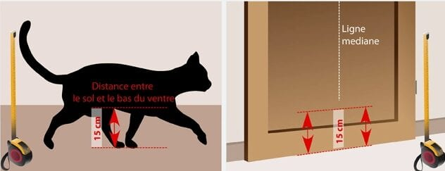 mesure chat